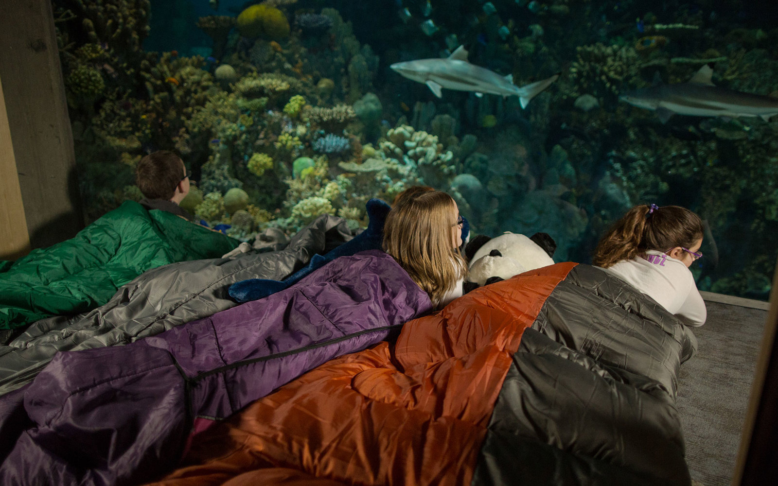 Museums And Zoos Where You Can Spend The Night Travel Leisure - 10 awesome aquariums where you can spend the night with sharks