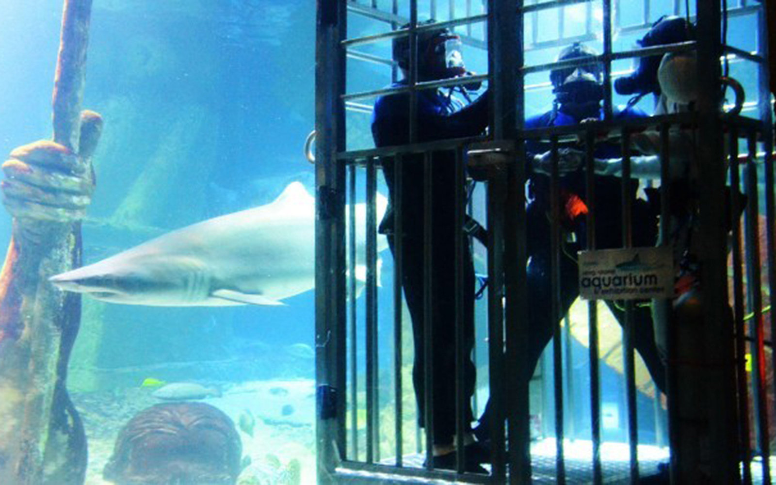 Atlantis Marine World shark tank wedding