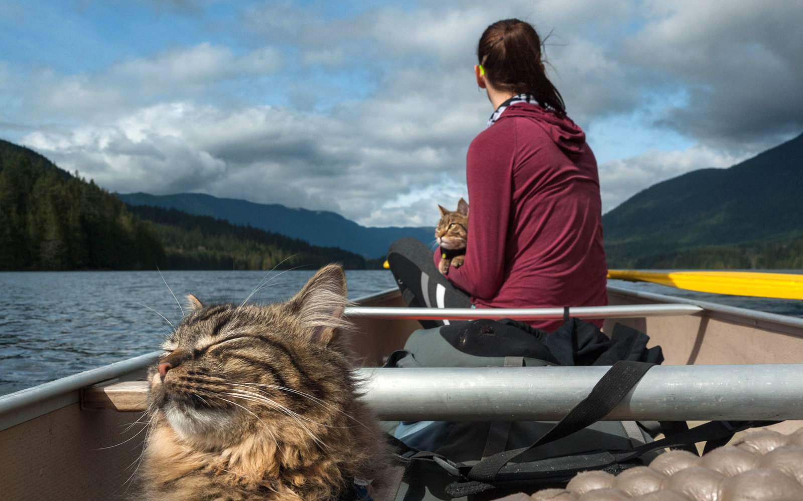 Watch How to Travel with a Cat video