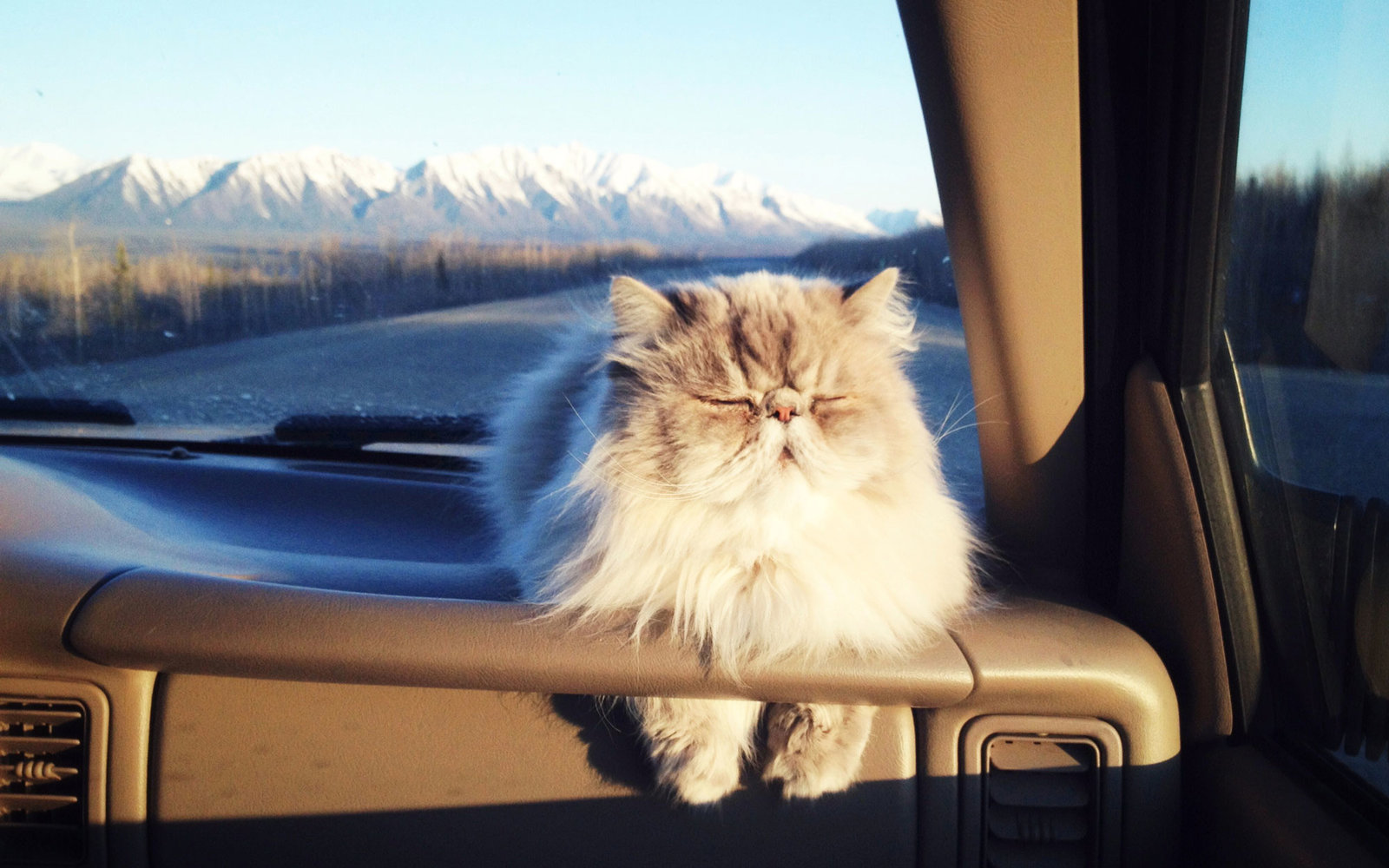 How to Travel with a Cat How to Travel with a Cat new pictures