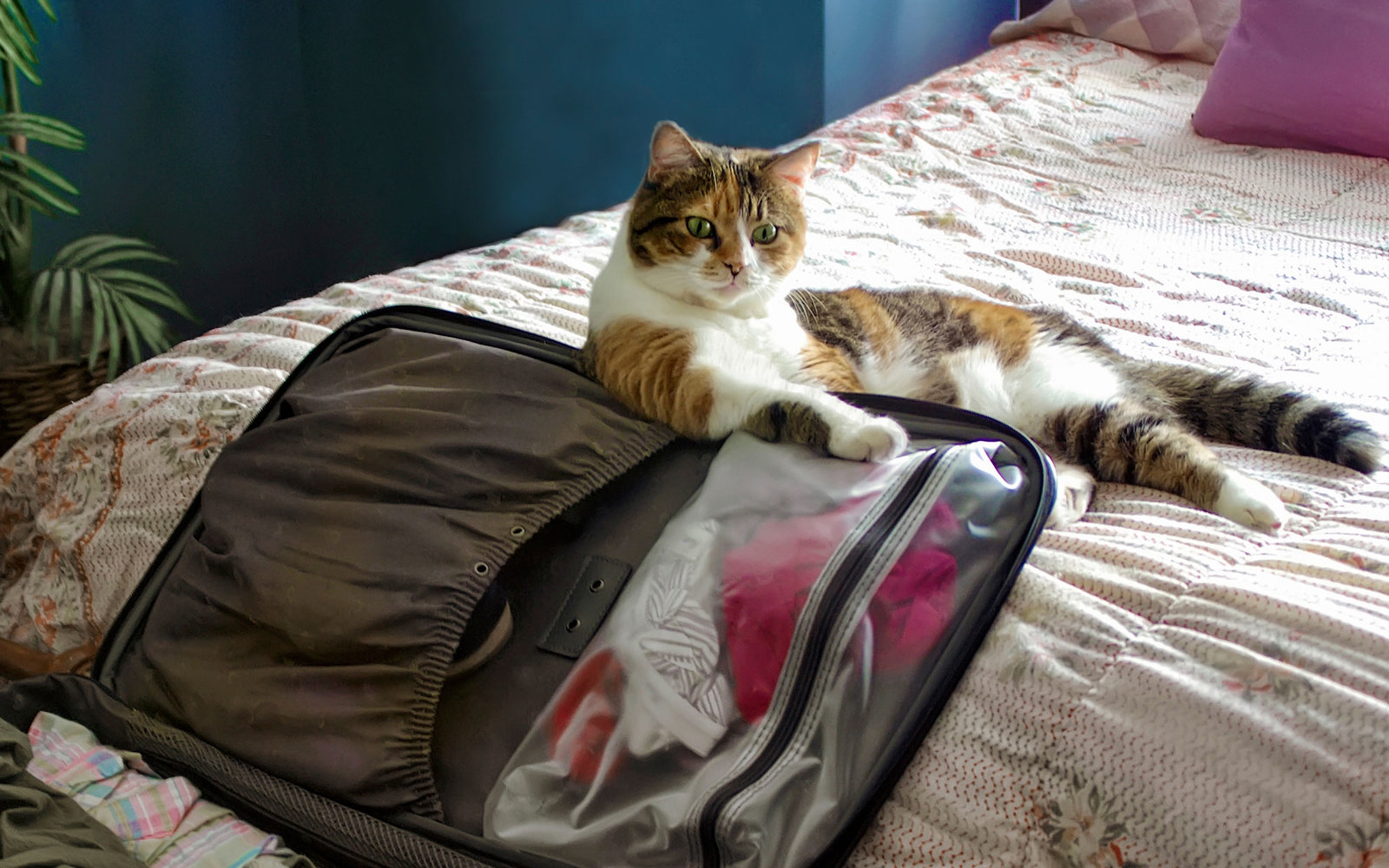 How to Travel with a Cat advise