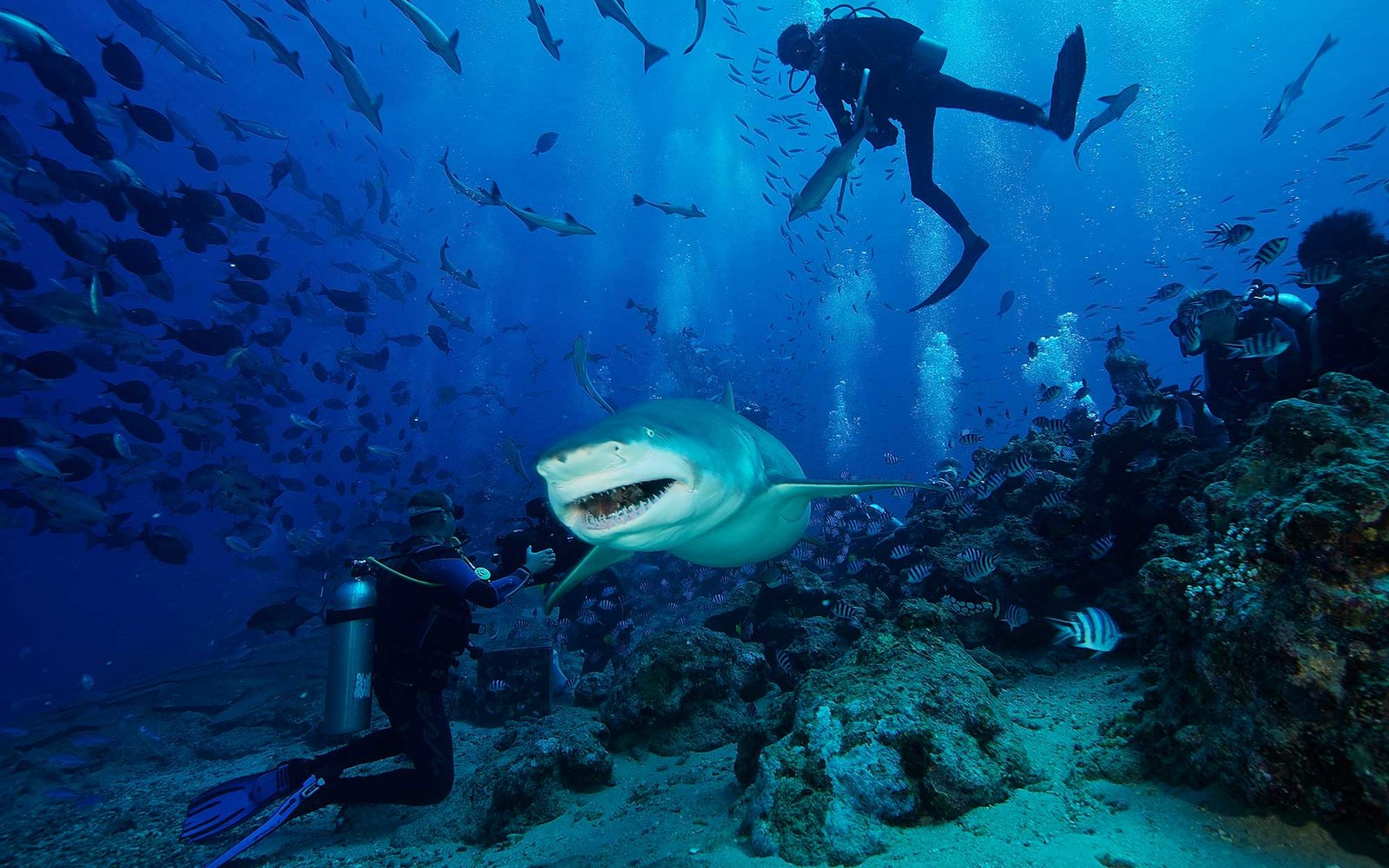 Shark diving in Fiji