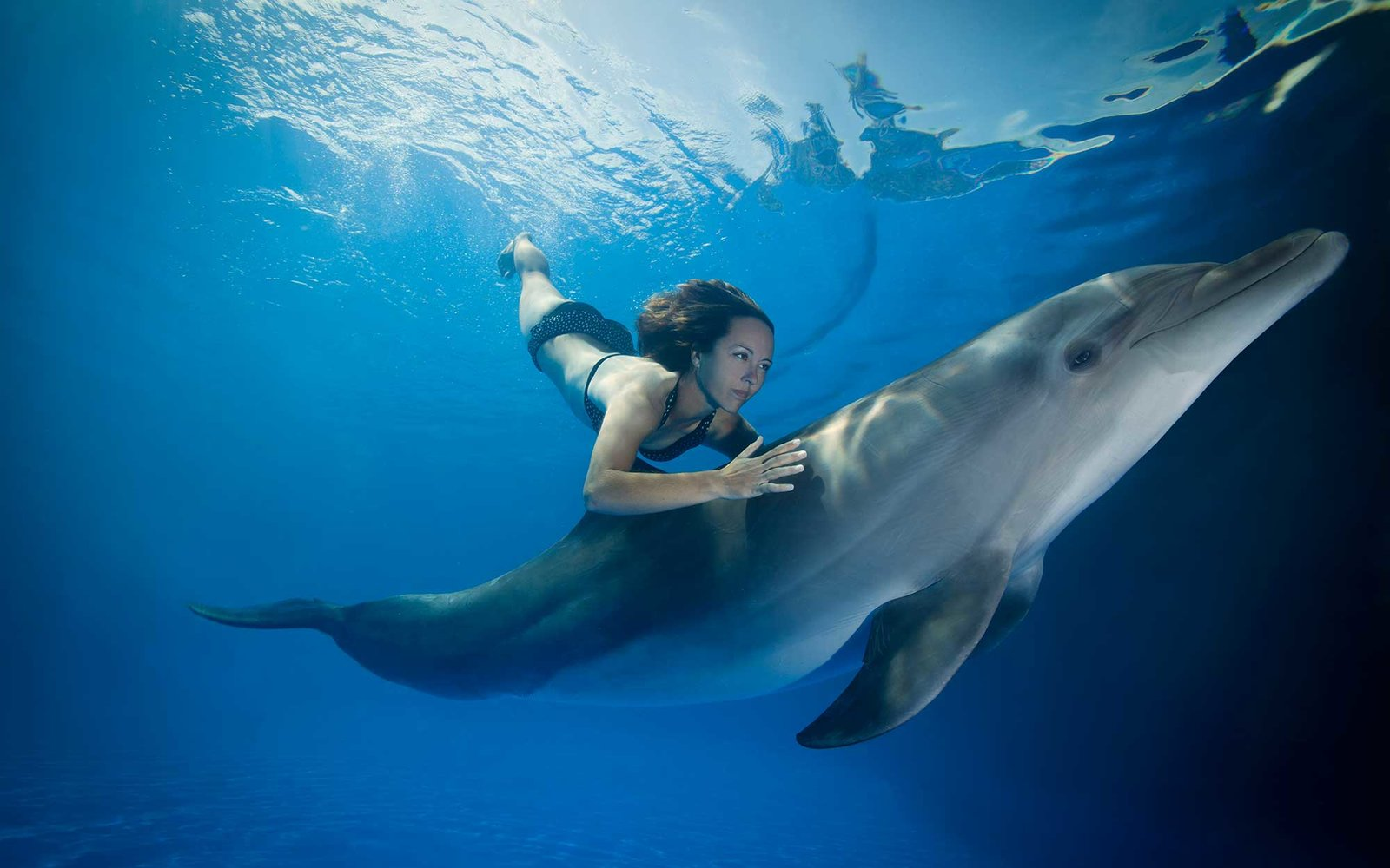 Swimming with dolphins in Mexico