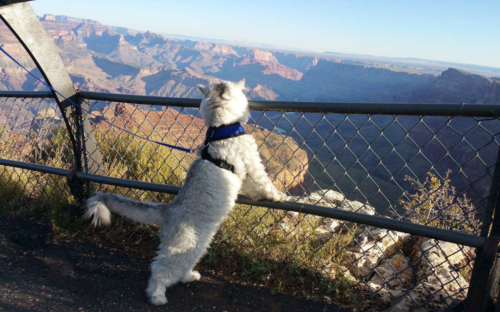 Grand-Canyon-Cats-CATRAVEL0516.jpg