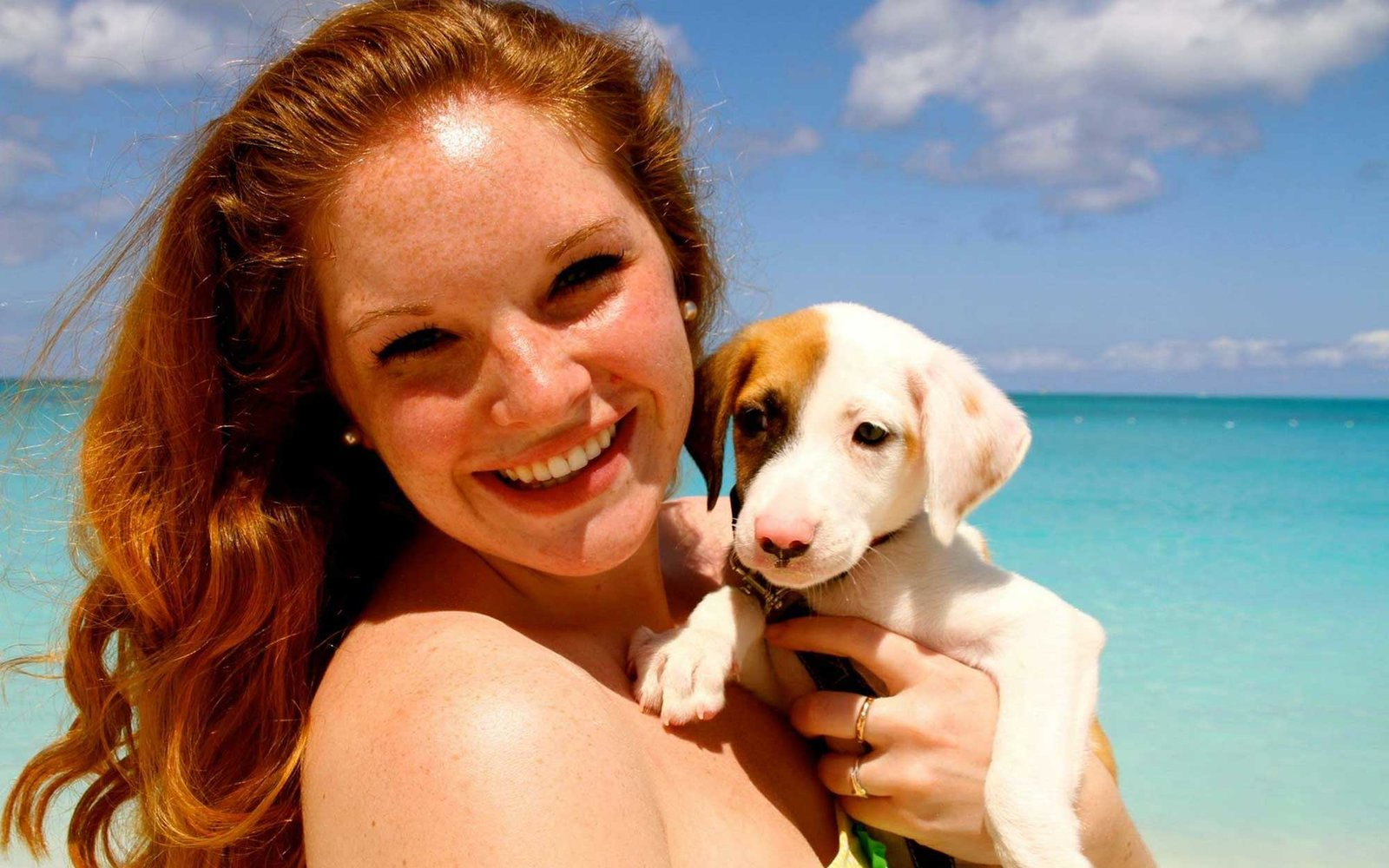 This Tropical Island Is Filled With Puppies You Can Adopt