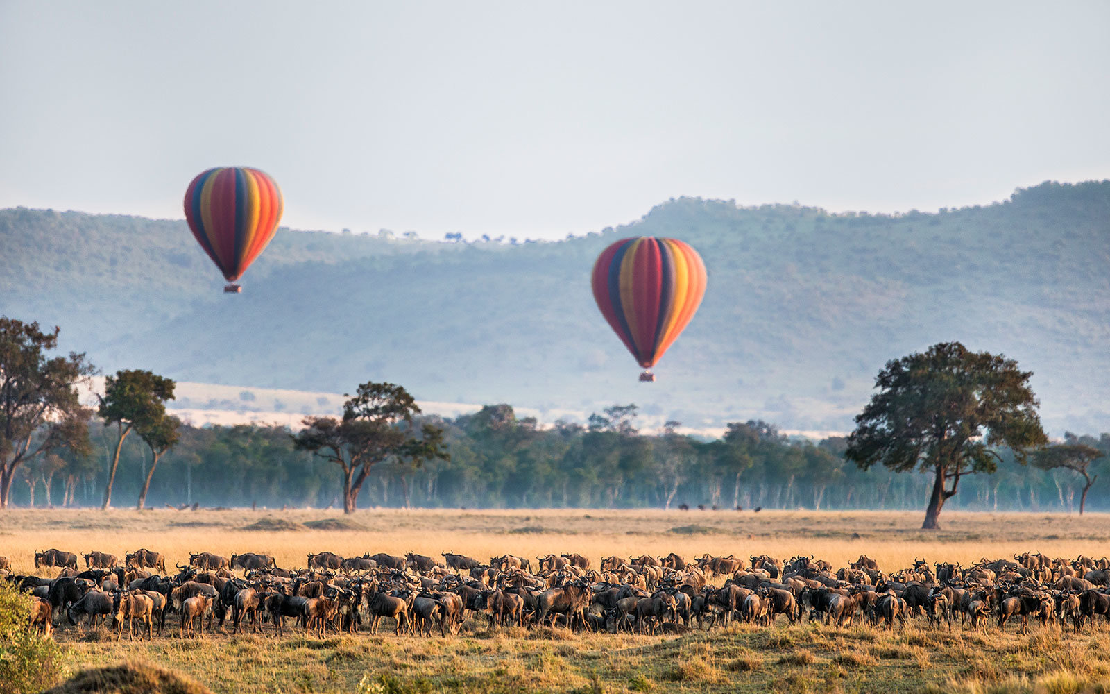 Africa, Kenya, Masai Mara, Narok County. Hot air balloons floating over the Wildebeest migration.