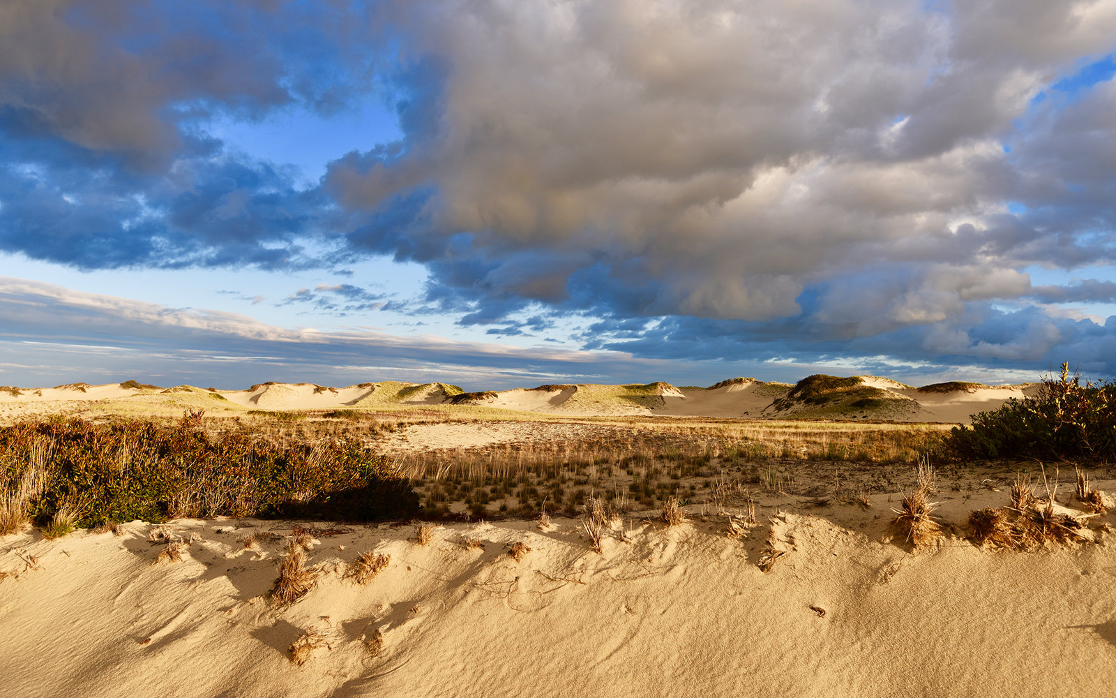 Art's Dunes Tours in Cape Cod