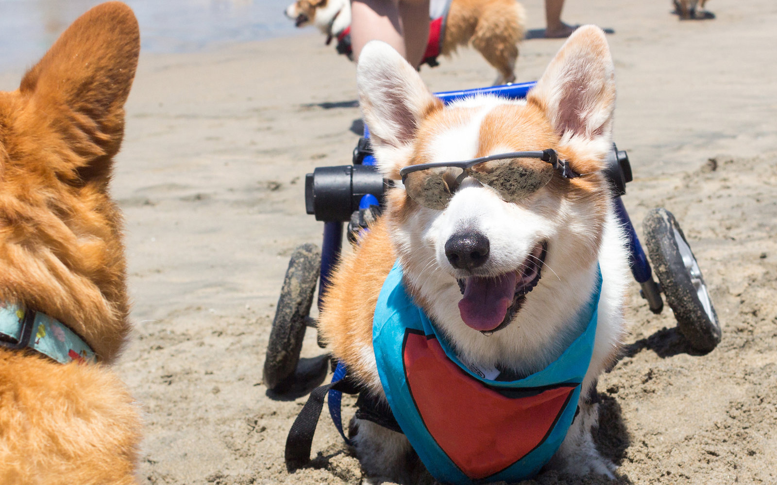 A Corgi Themed Festival Is Happening In California This