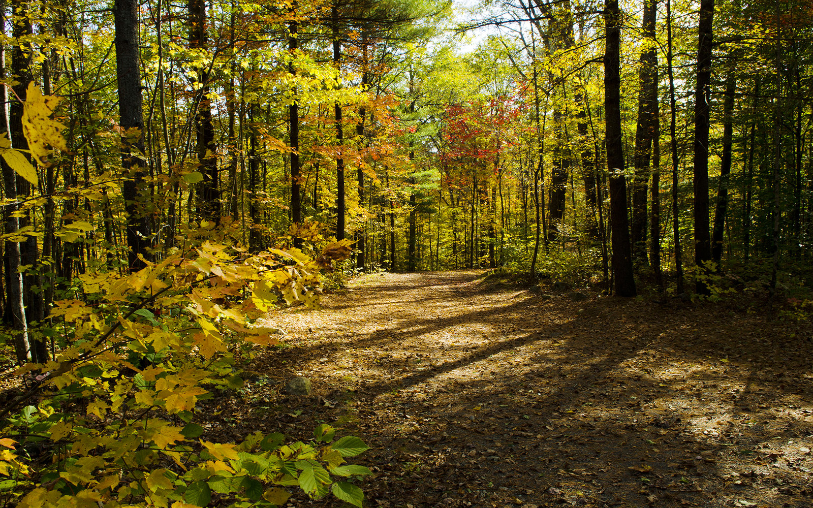 Trail in Rockland Maine