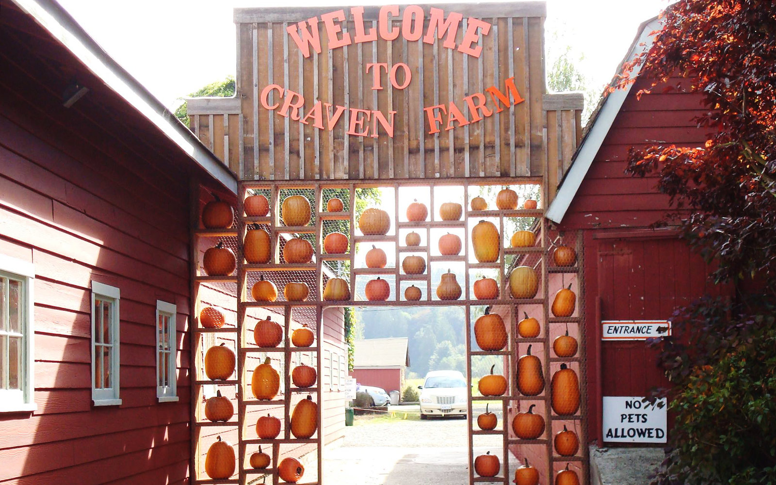 Craven Farm Pumpkin Farm