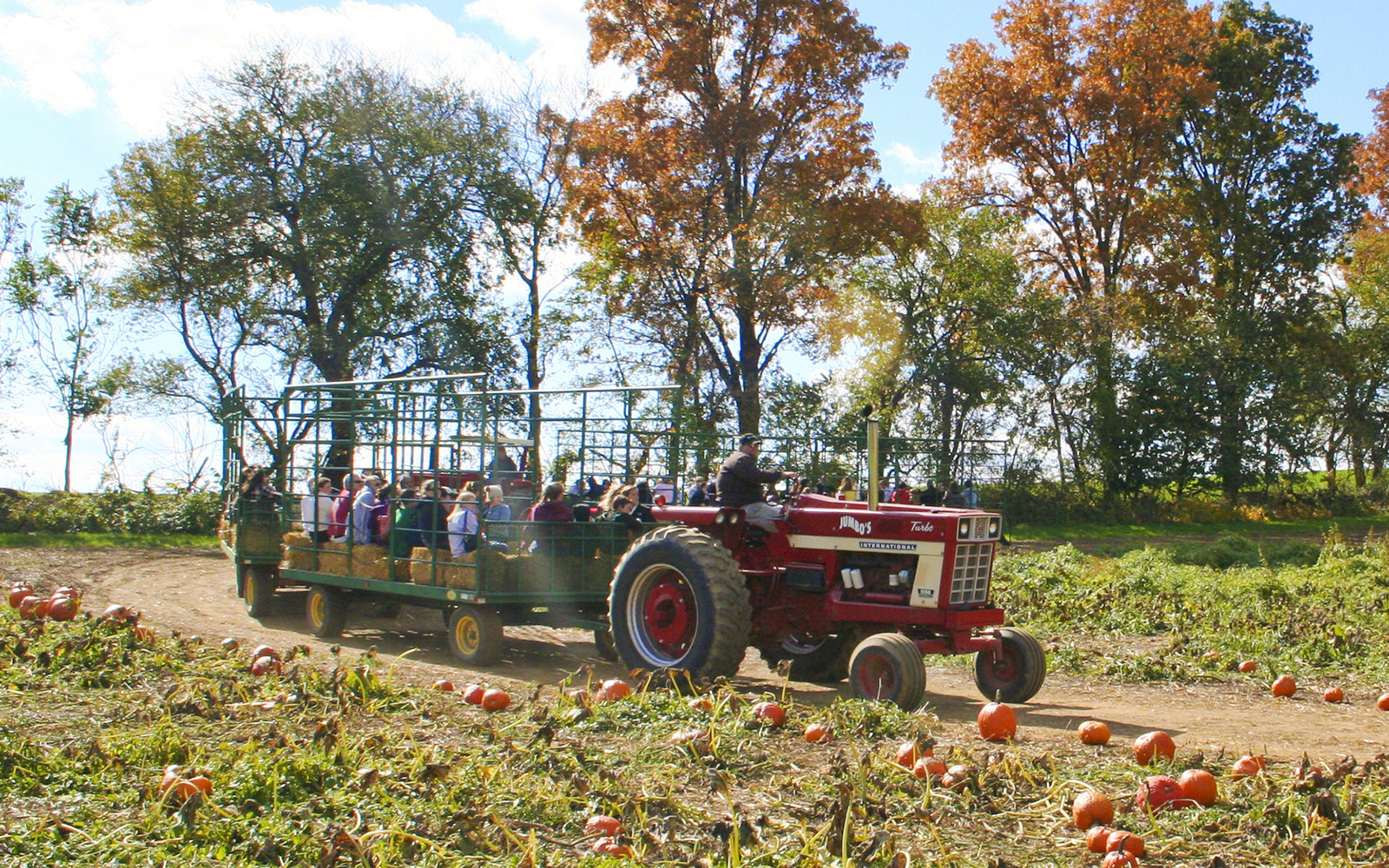 Jumbo's Pumpkin Patch in Middleton,  Maryland