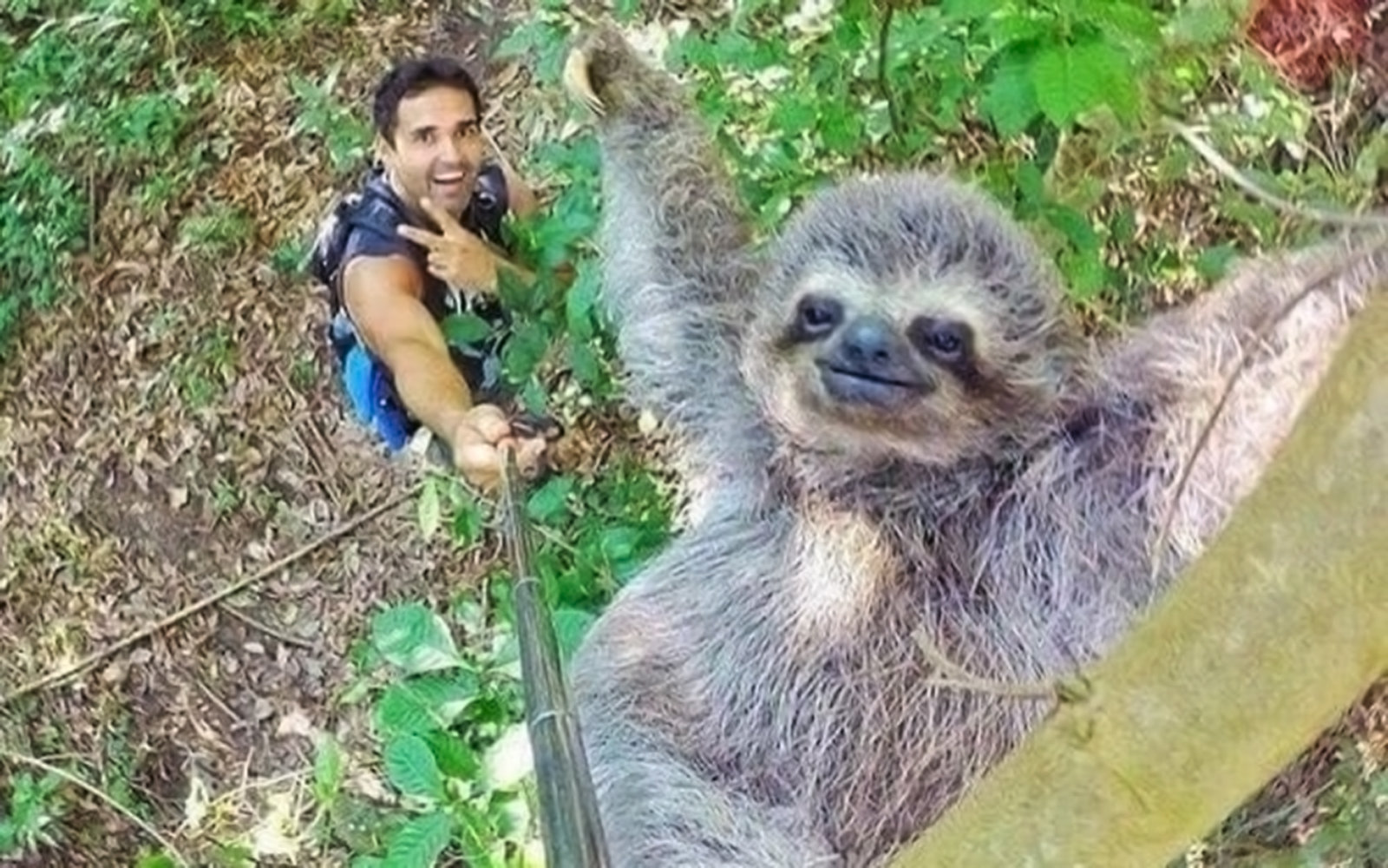 Man Takes Sloth Selfie