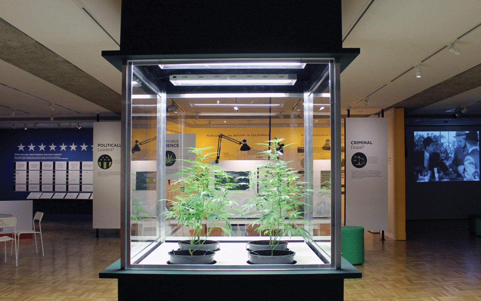 Oakland Museum of California Marijuana Exhibit