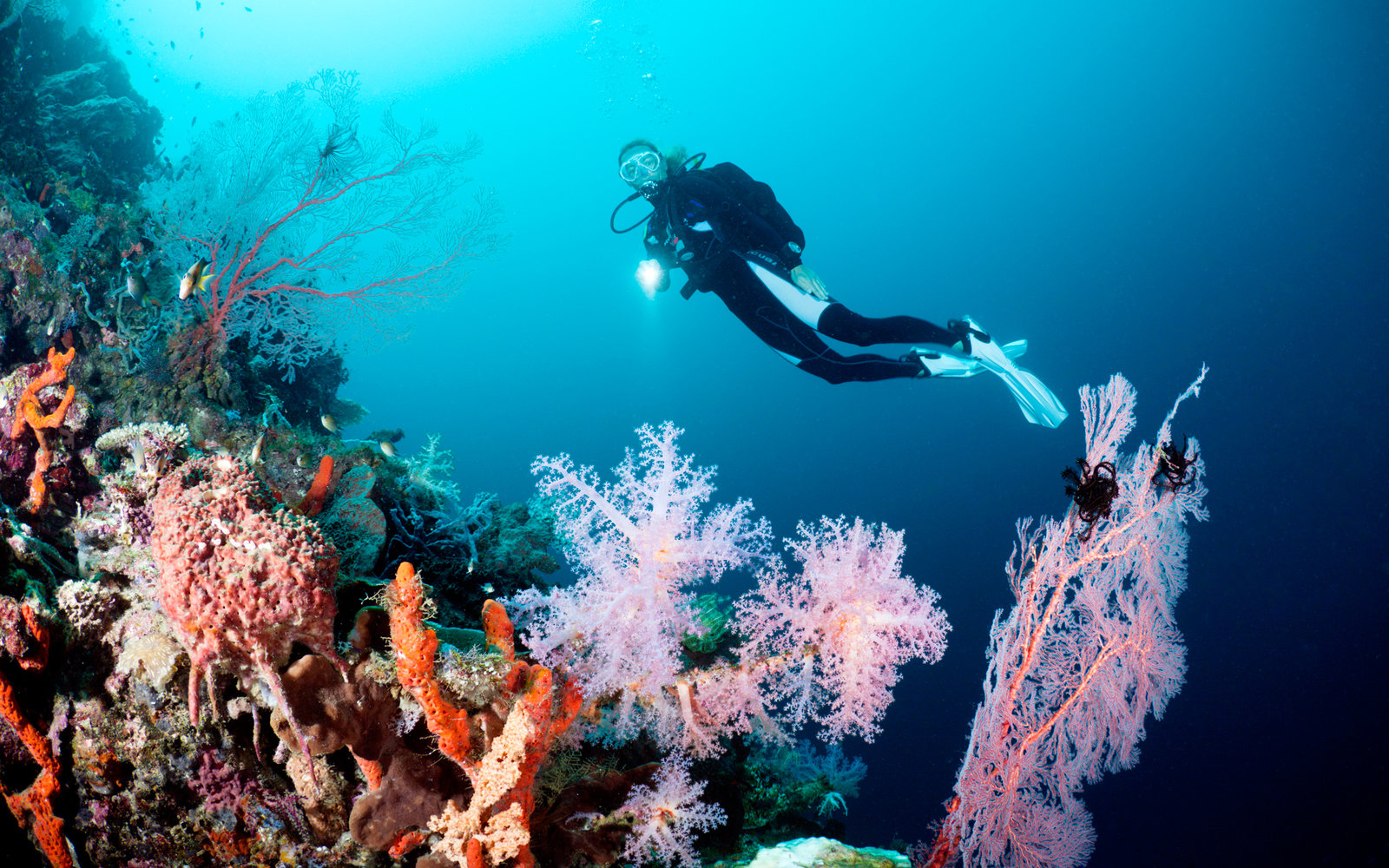 Experience the beauty of Coral Reef with this 360-degree underwater tour