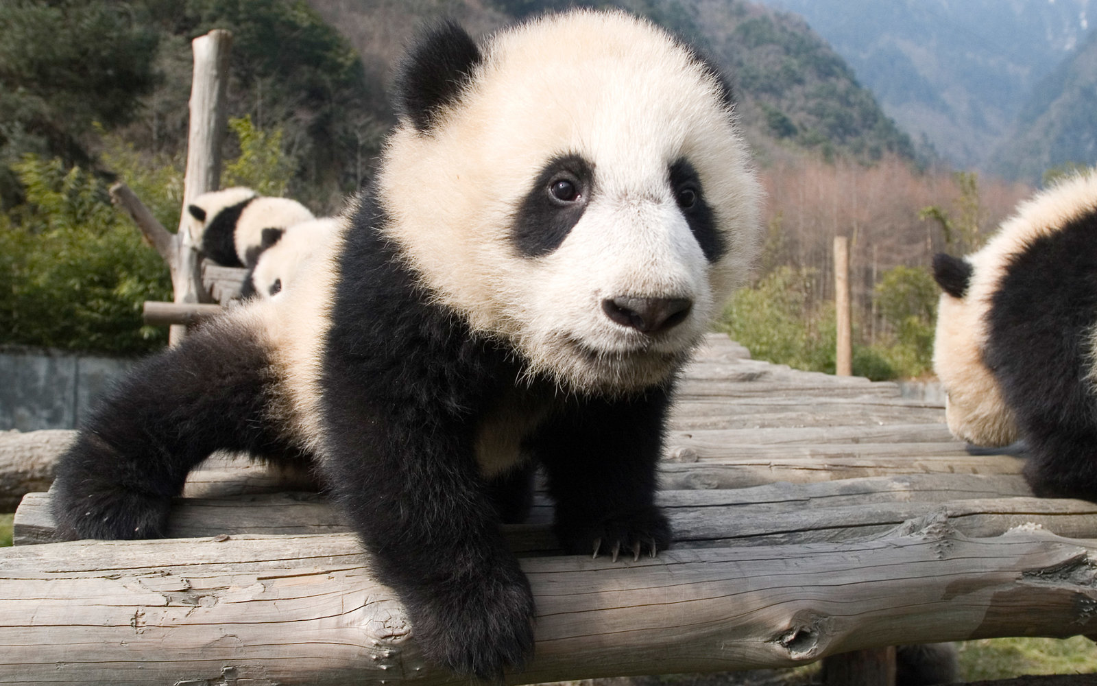 Endangered Species Prompt China to Plan Four New National Parks