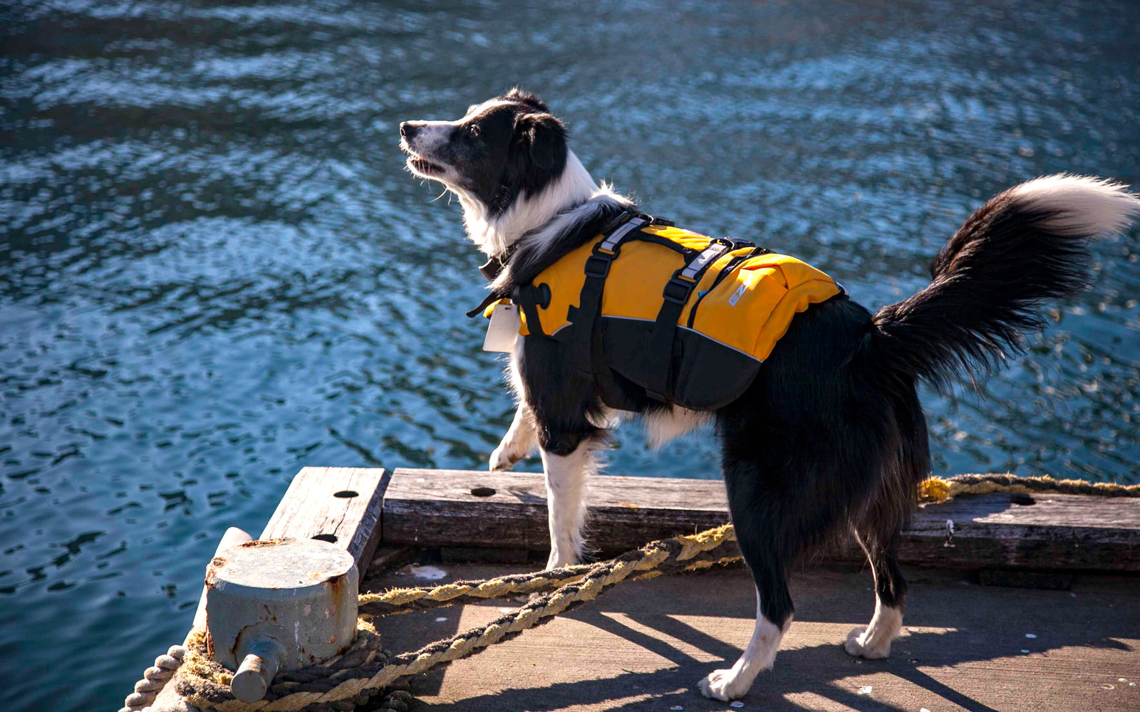 Museum Hires Seagulll-Chasing Rescue Dog