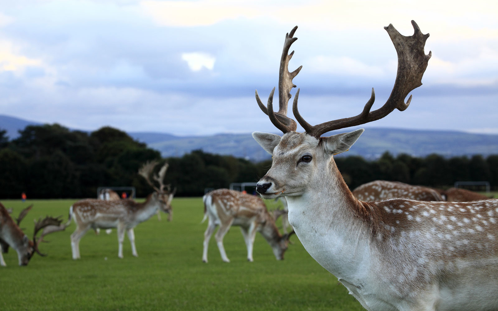 A deer tackled a triathlete in Dublin.
