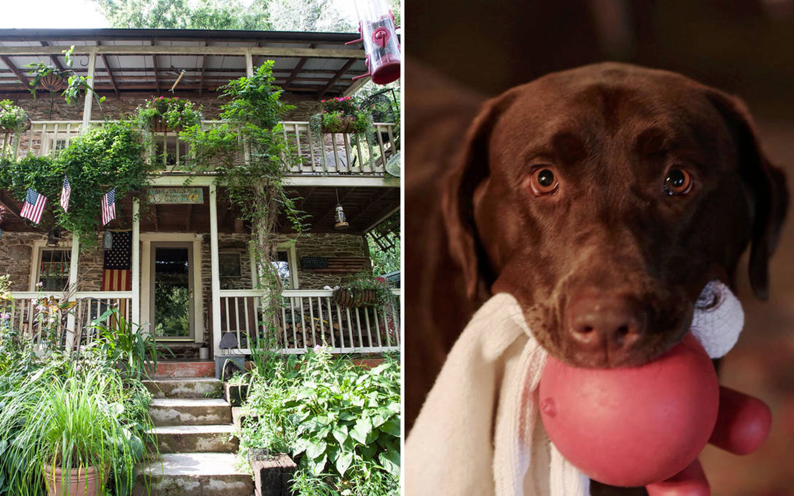 Airbnb in U.S. For Animal Lovers