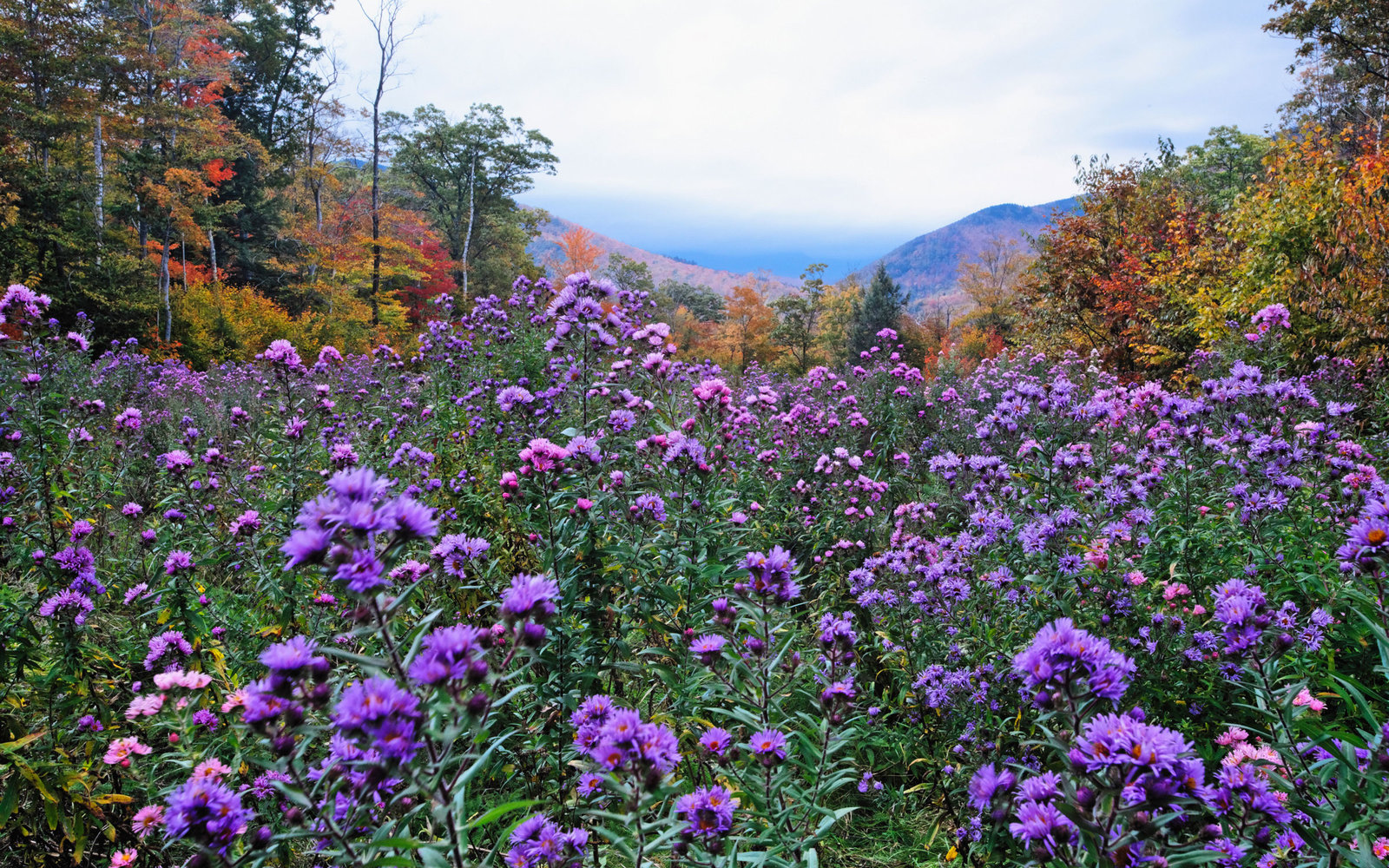 In Photos The Fall Wildflower Bloom Travel Leisure