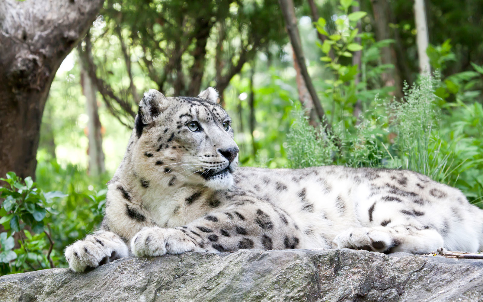 Afghanistan Wants You To Come See Its Snow Leopards