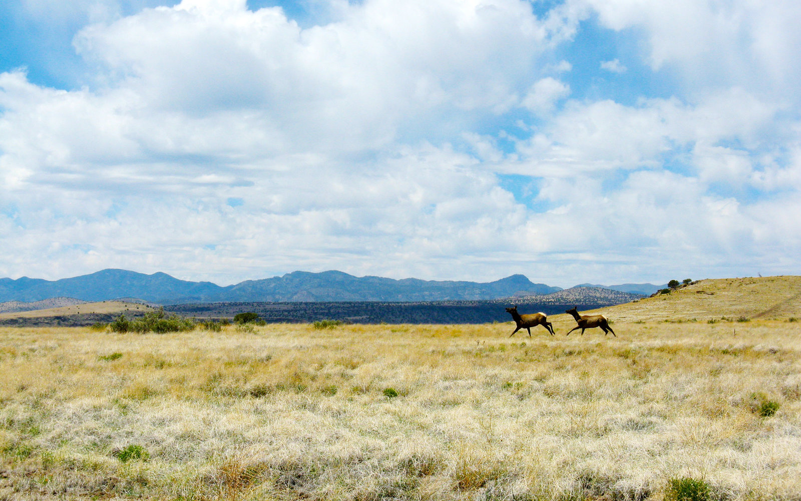 new-mexico-ladder-ranch-PHOTOTRIPS1116.jpg