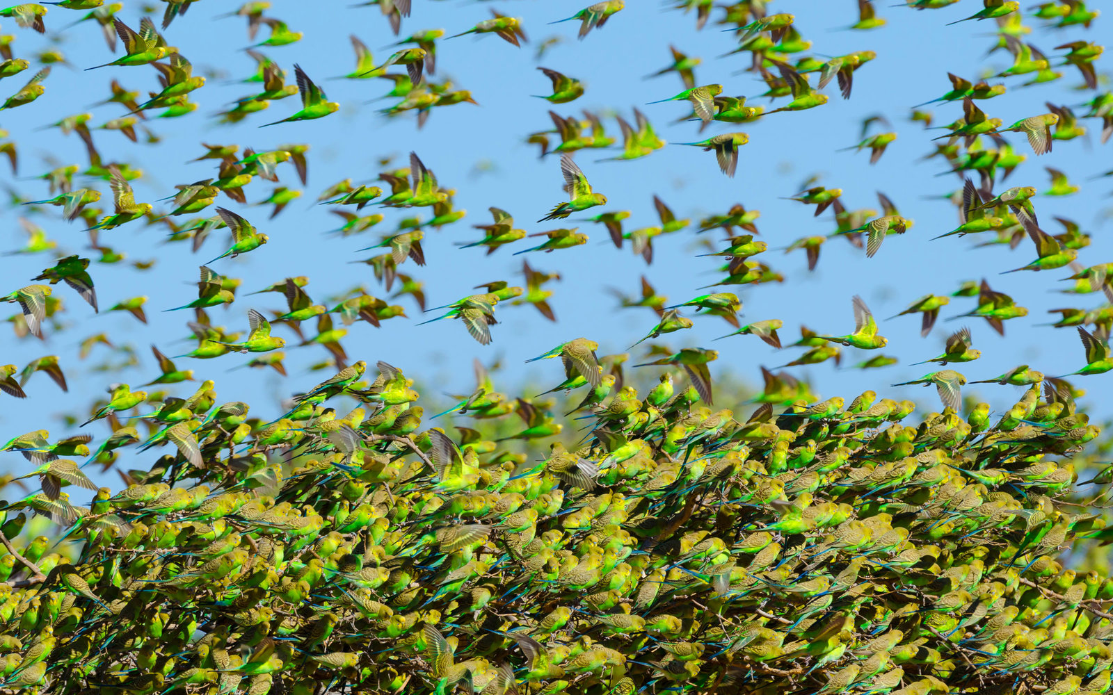 Studying birds for air travel