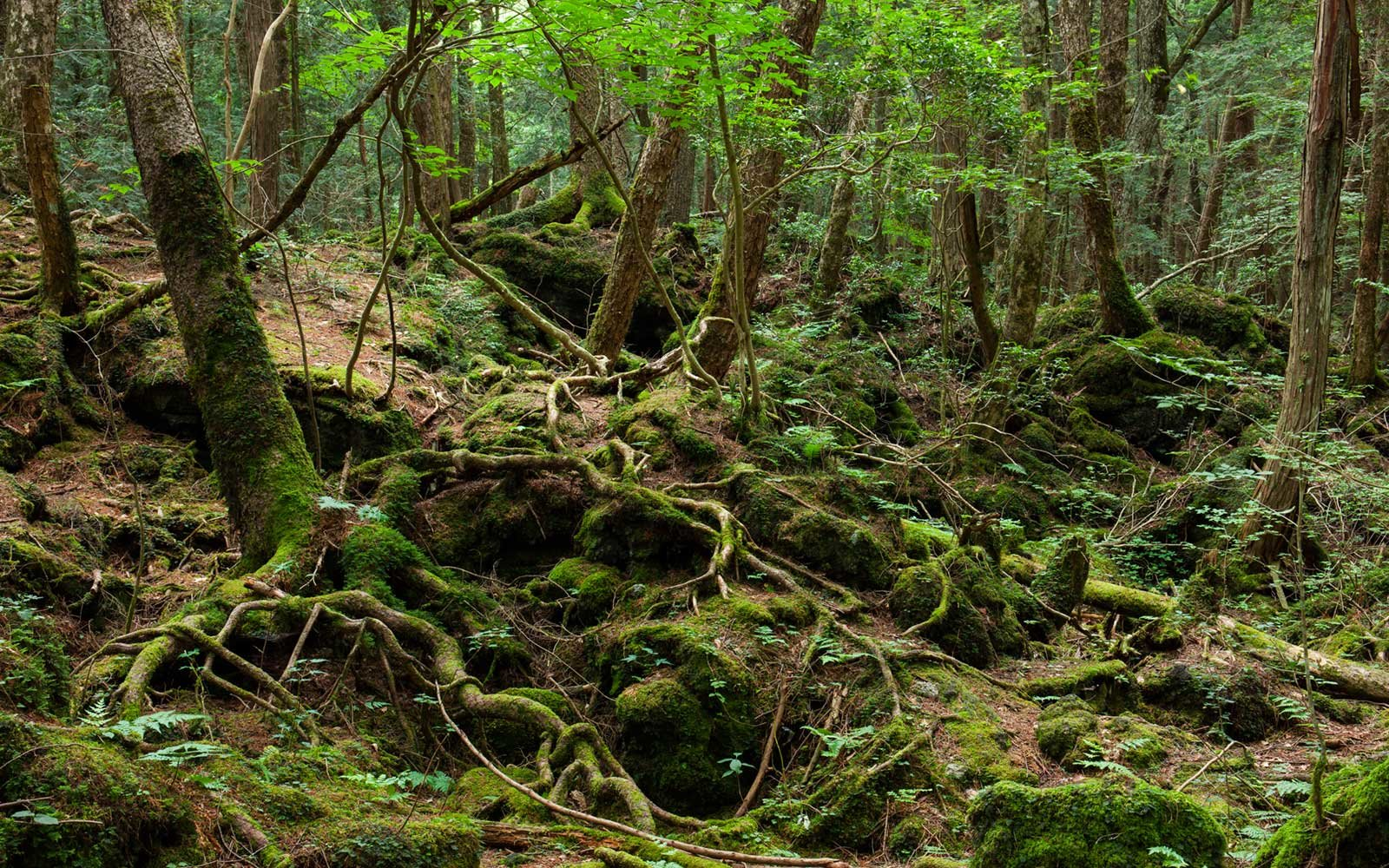 Aokigahara Forest in Japan