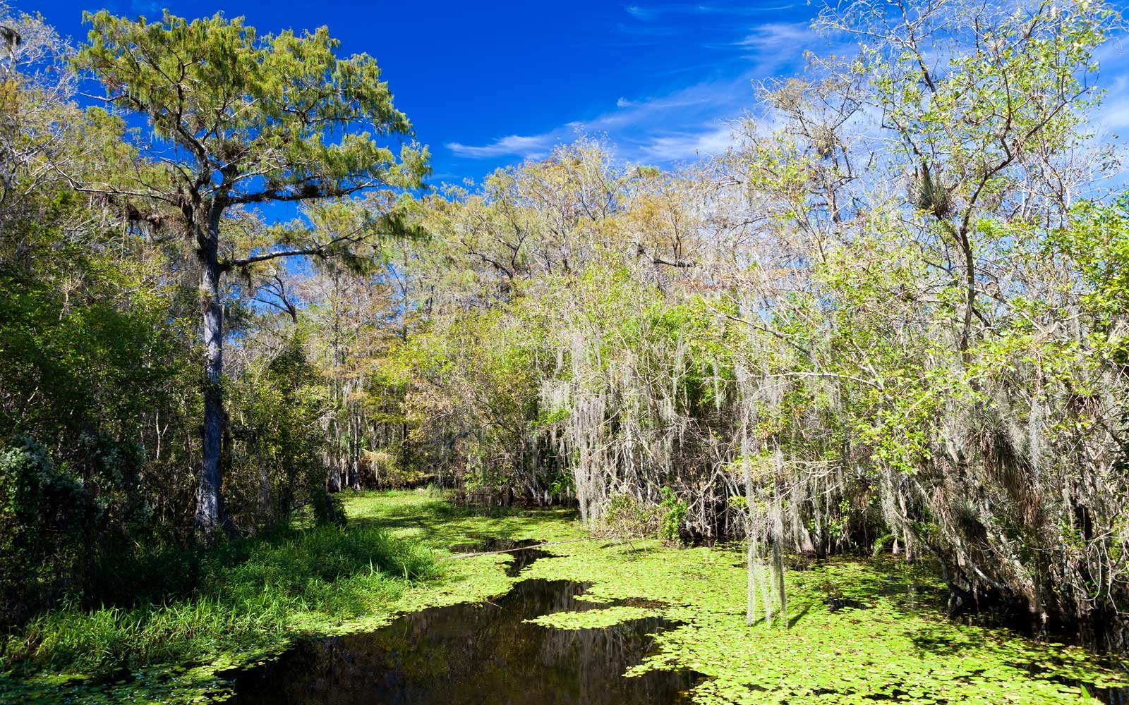 A Guide to National Parks in Florida