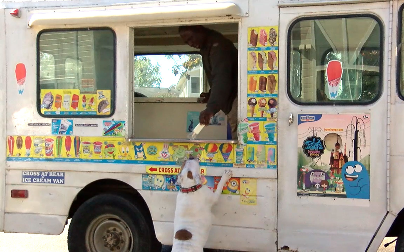 Ice cream truck's most loyal customer is this beautiful dog
