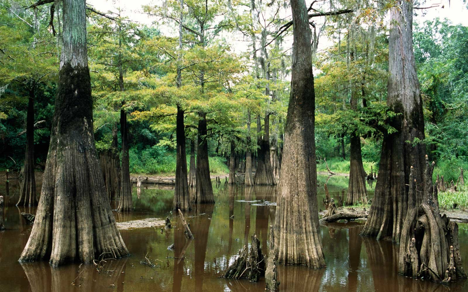 Best National Parks In Texas Travel Leisure