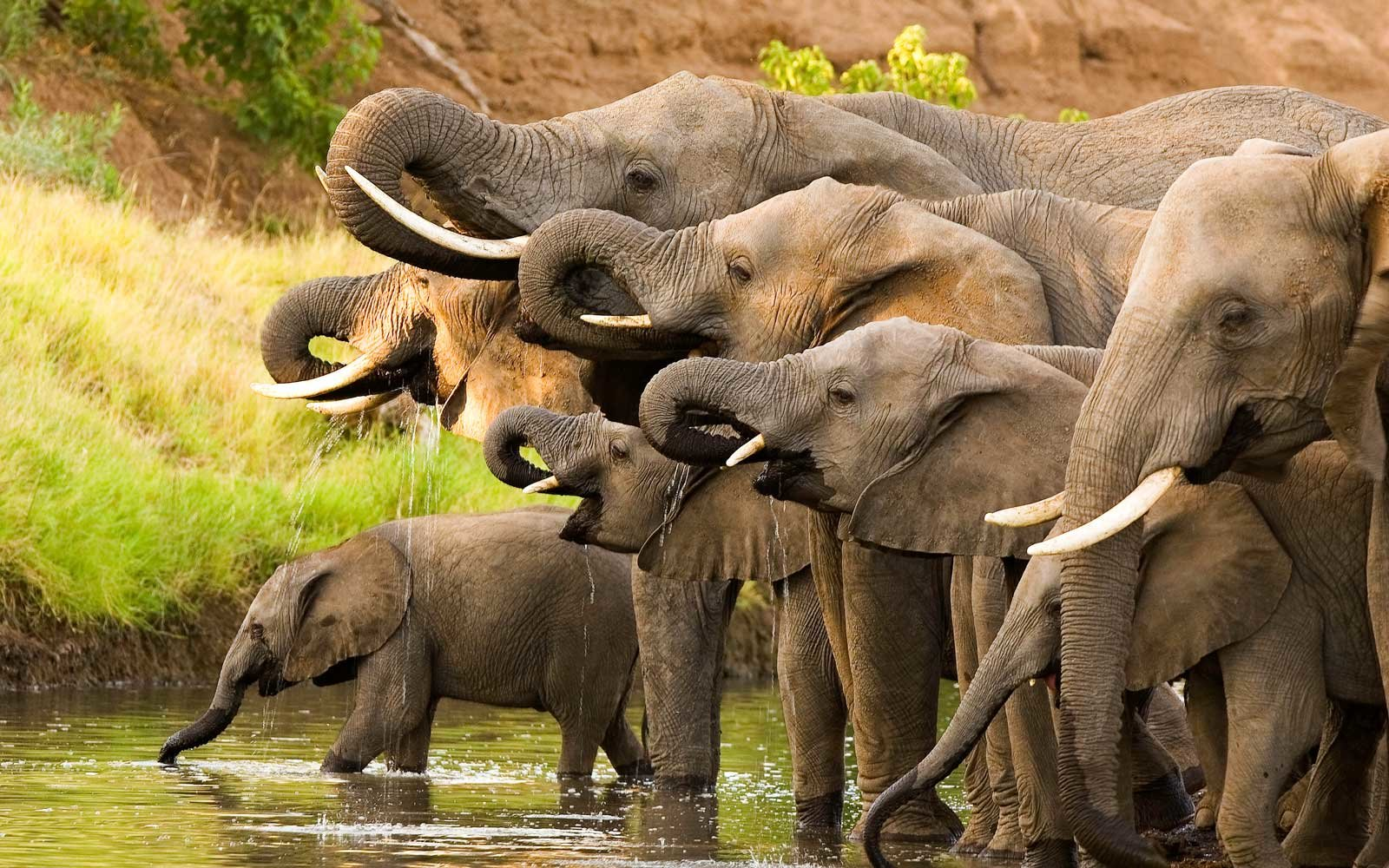 Elephant poaching could cost africa 25 million a year in tourism revenue travel leisure - Image elephant ...