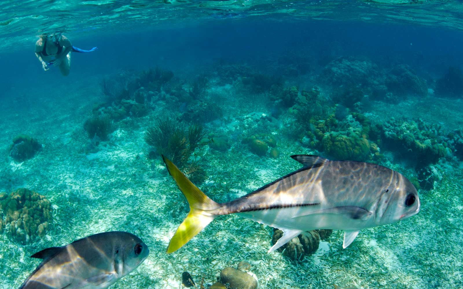 The Best Snorkeling Spots in the World photo