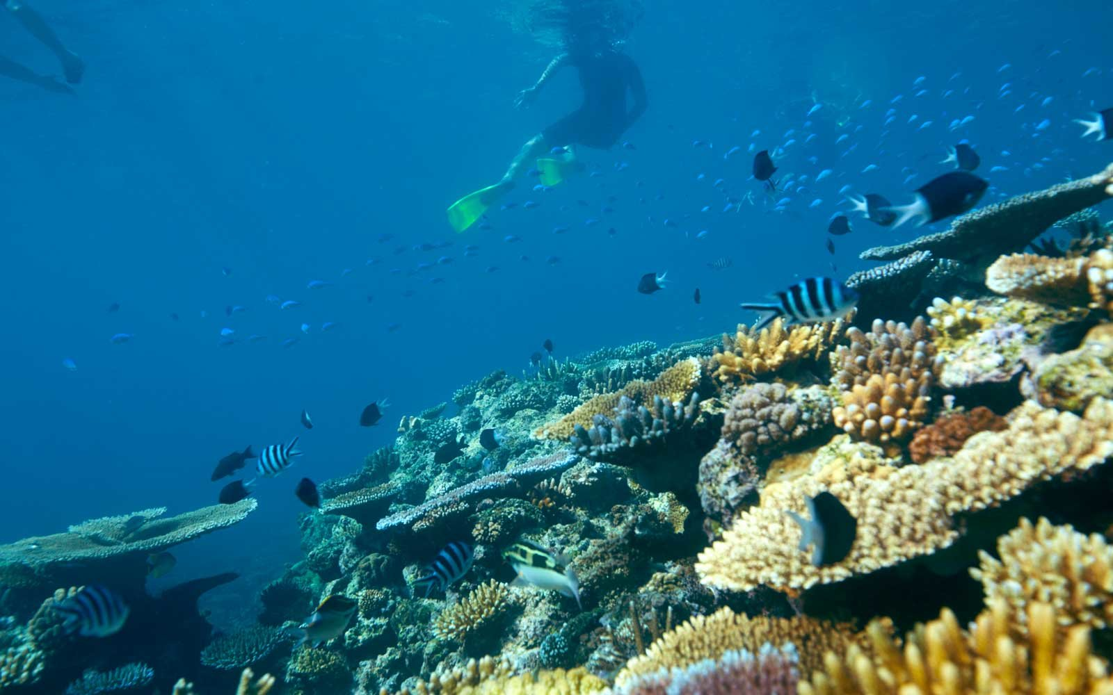 10 Snorkeling Spots You Need to Add to Your Bucket List ...