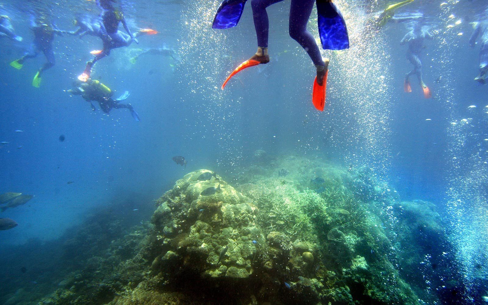 4. Dive Into the Great Barrier Reef in Australia
