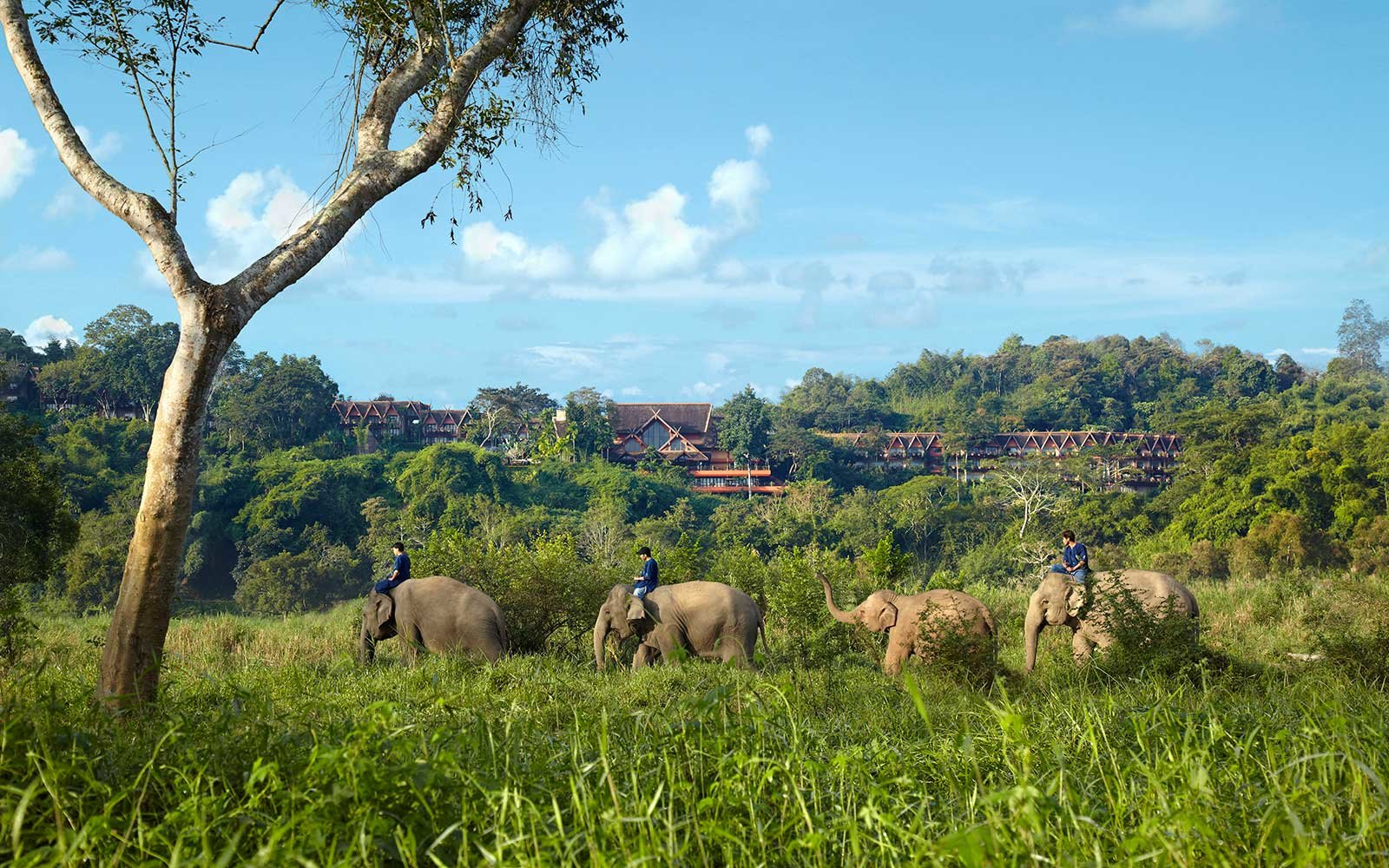 Anantara Golden Triangle Elephant Camp and Resort, Thailand