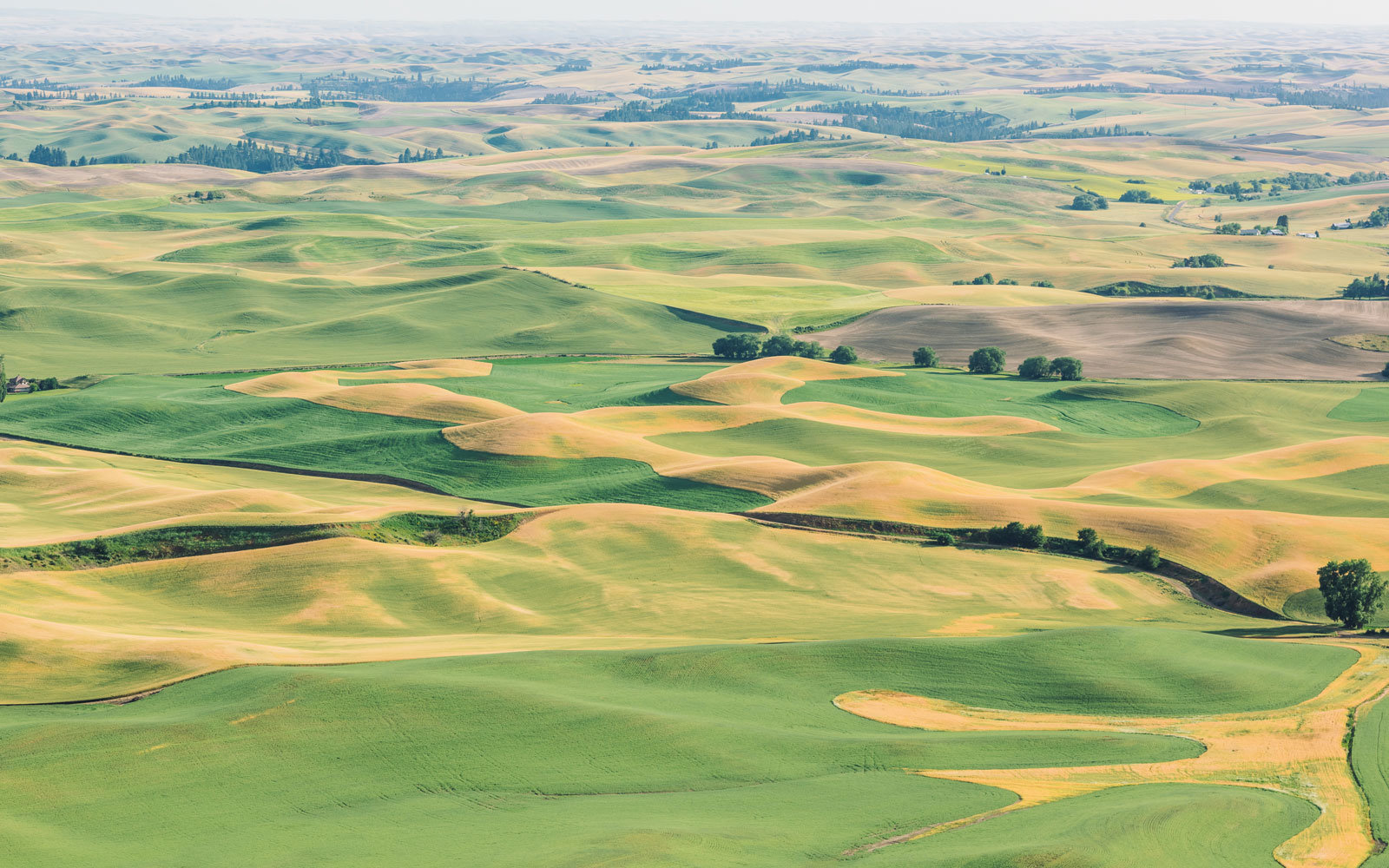 Palouse Plains