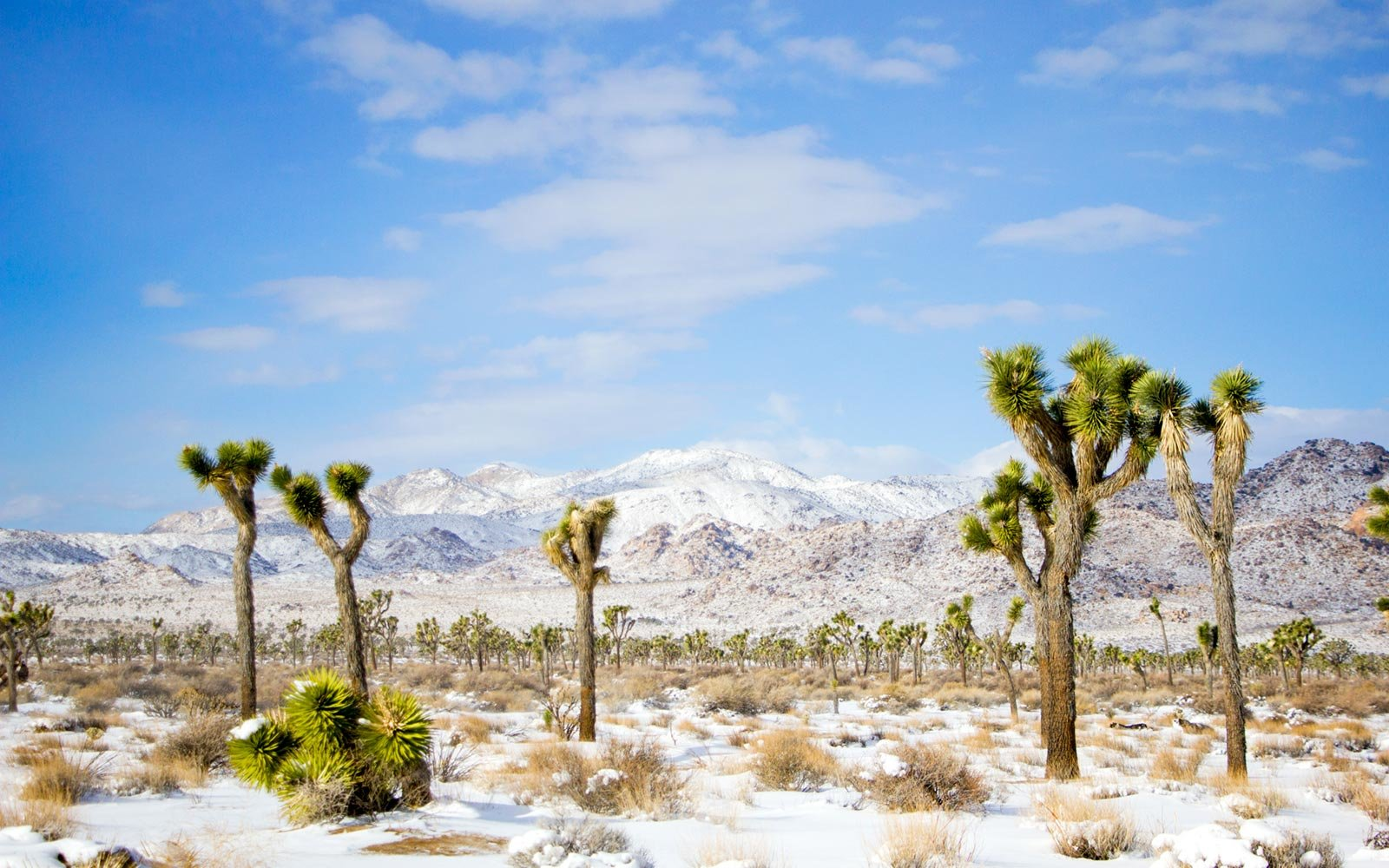 Snow, Joshua Tree National Park, Southern California