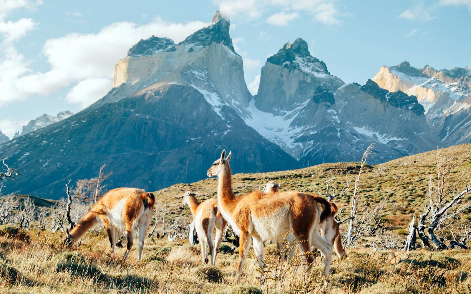 How to Travel to Patagonia | Travel + Leisure