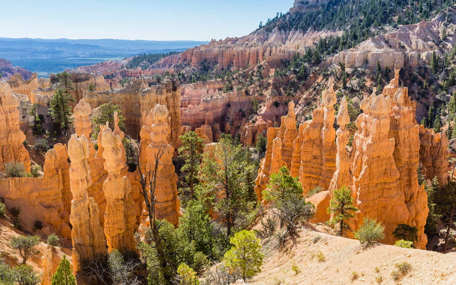 Hoodoo rock formations, Fairyland Trail, Bryce Canyon National Park, Utah