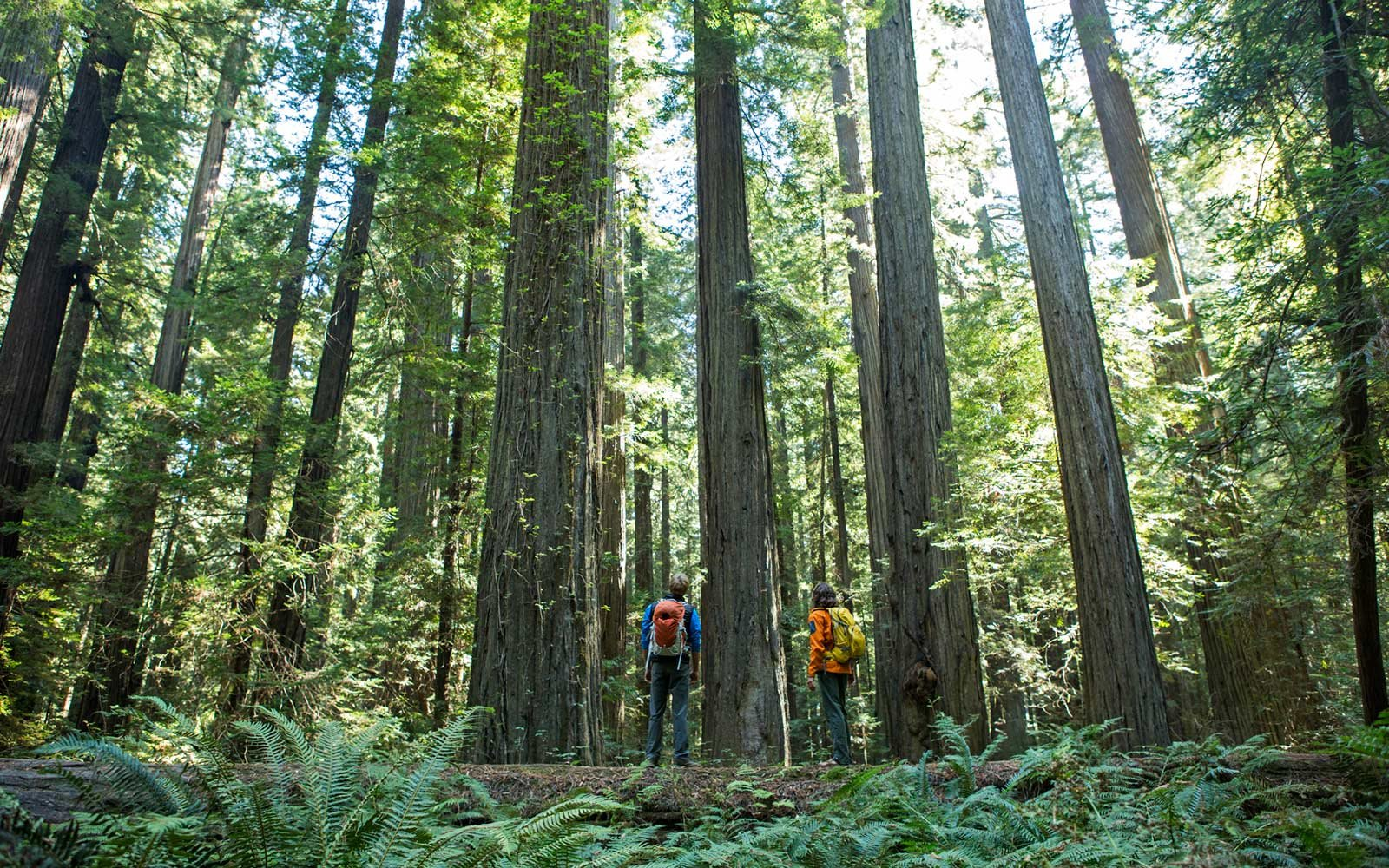 redwood-national-forest-california-almost-lost-REDWOOD1202.jpg