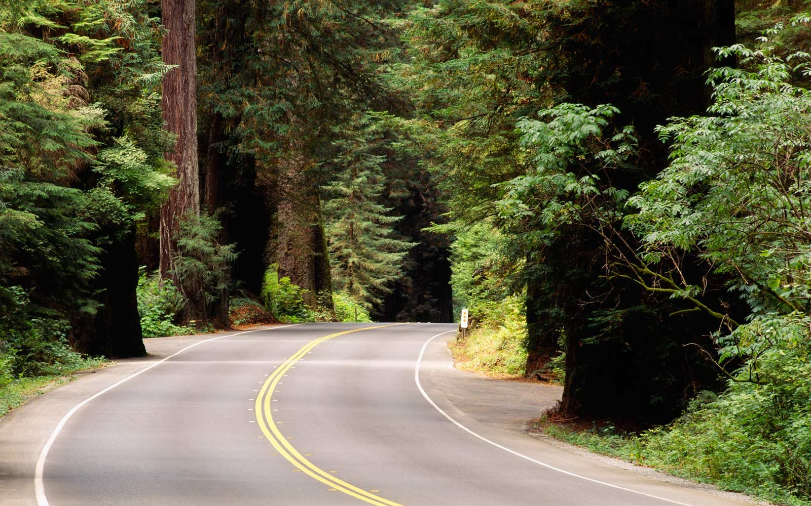 Newton B. Drury Scenic Parkway, Redwood National Forest, California