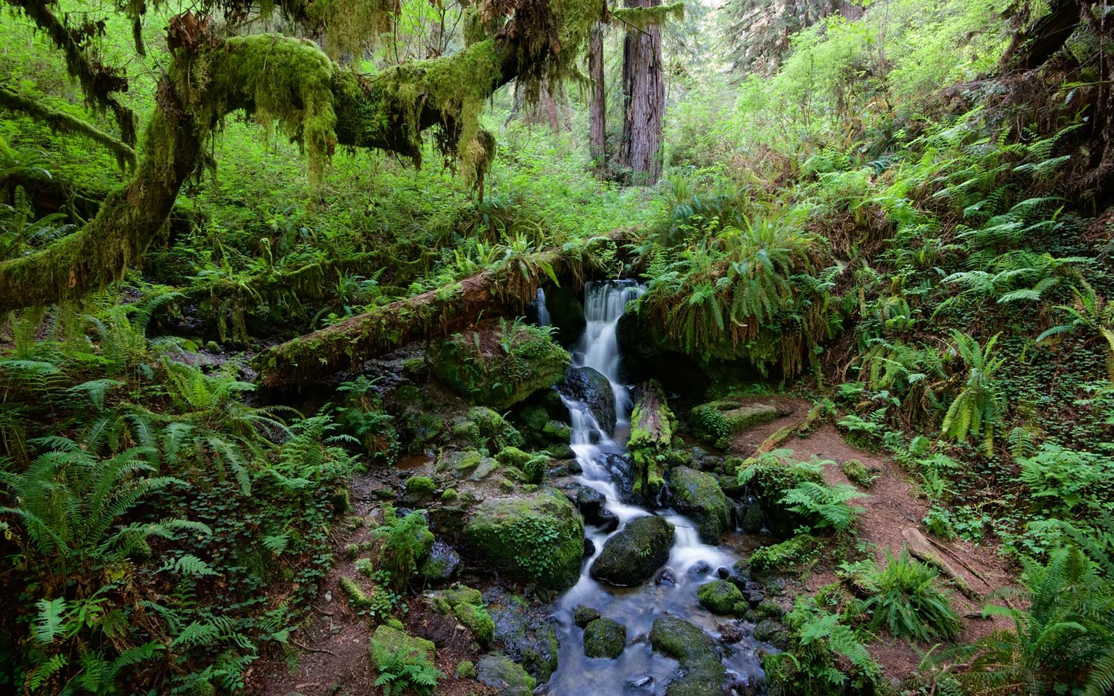 Trillium Falls, Redwood National Forest, California