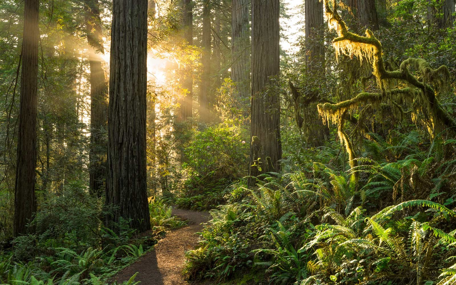 Best Ski Resorts In California >> A Guide to Redwood National Park | Travel + Leisure