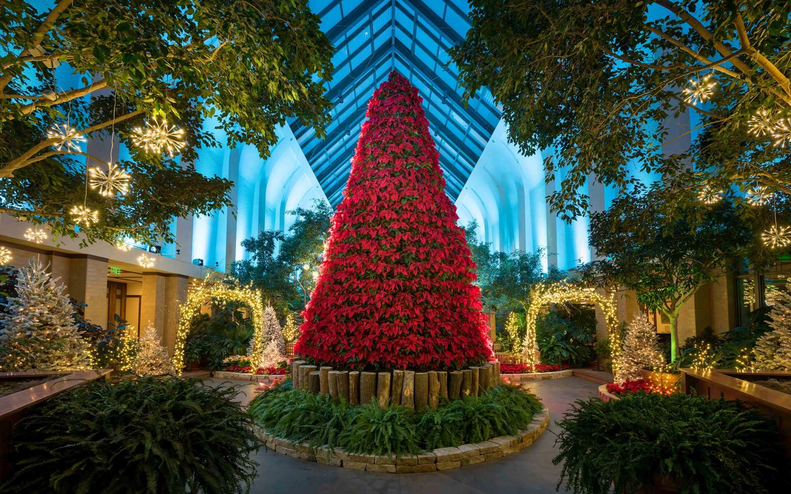 The Poinsettia Christmas Tree in Omaha,  Nebraska