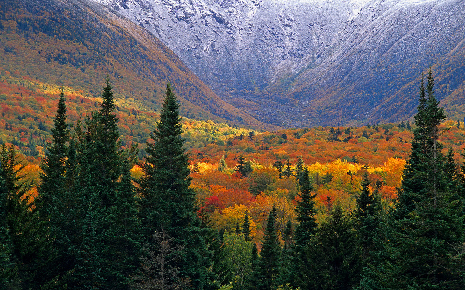 white-mountains-national-forest-XMASTREE1216.jpg