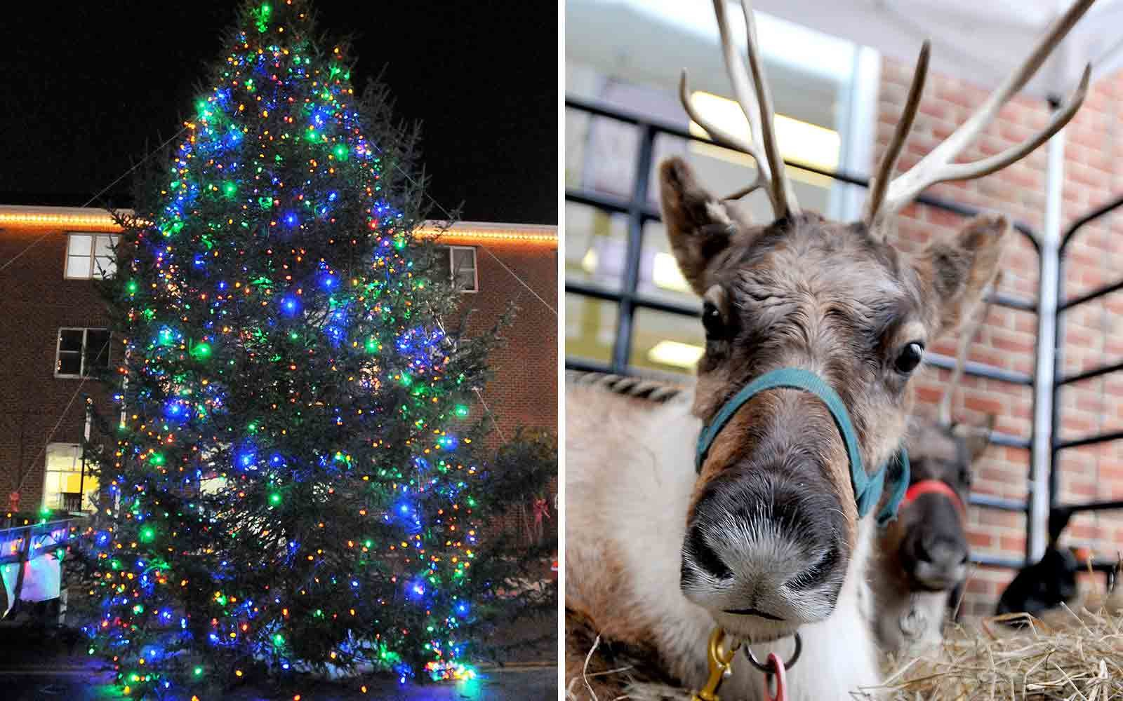 Towns that have great christmas decorations read - Best Christmas Tree In Every State
