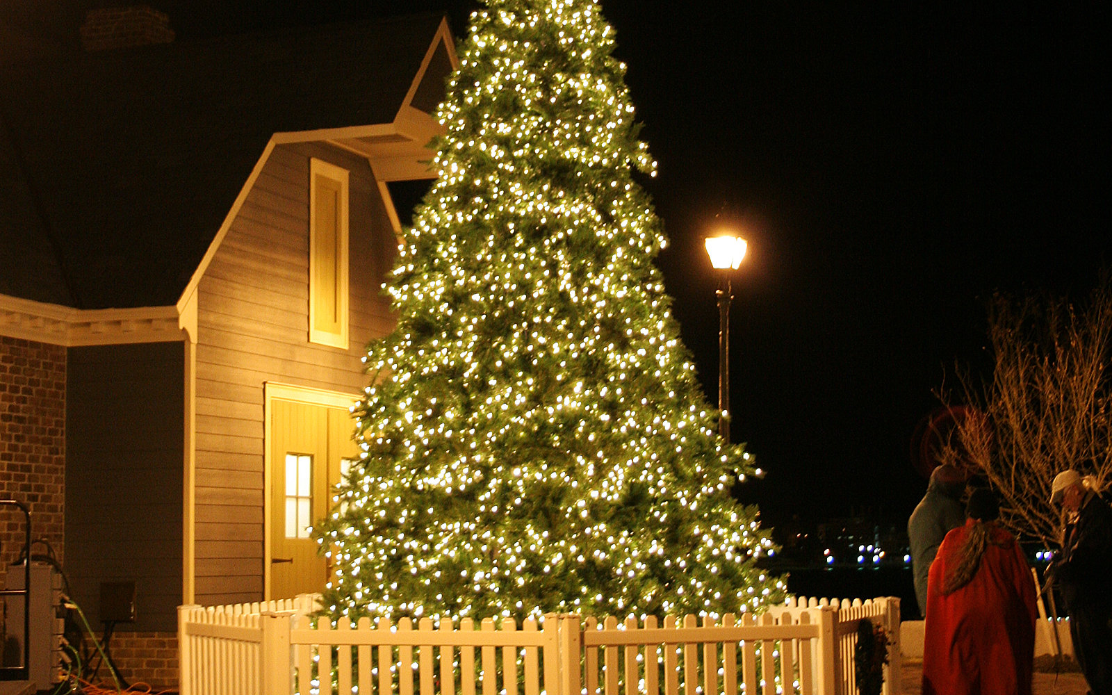 The Best Christmas Trees in the United States | Travel + Leisure