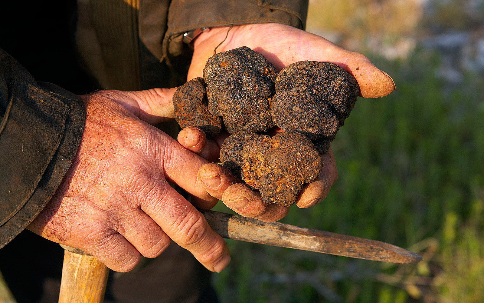 Europe's winter truffle  season