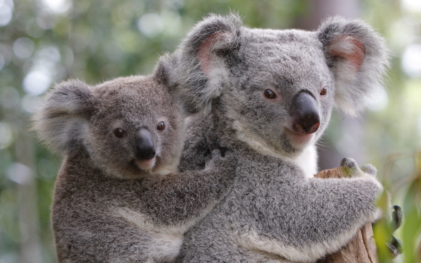 these adorable animals are helping australia u2019s tourism