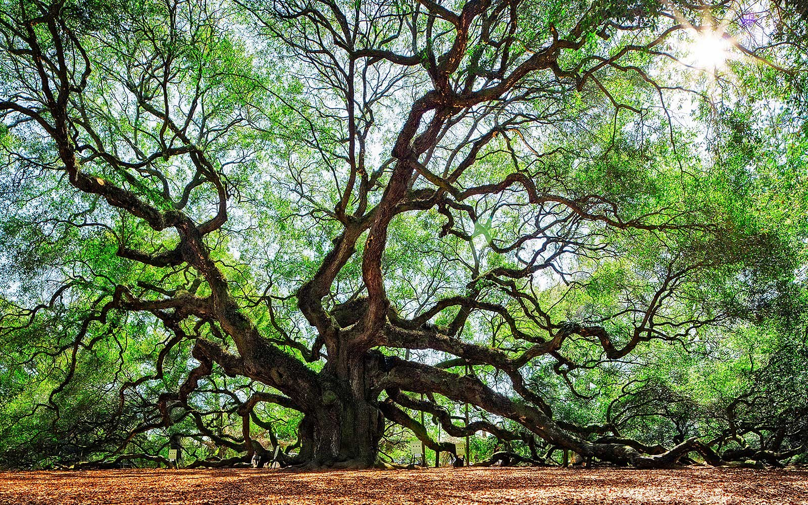 Best Trees to See